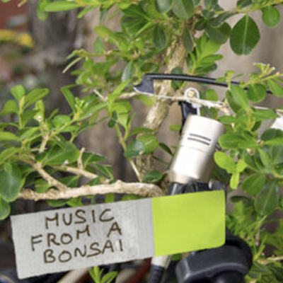 music bonsai