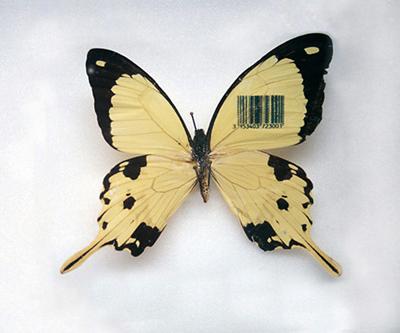 Le Farfalle di Sarah Garzoni