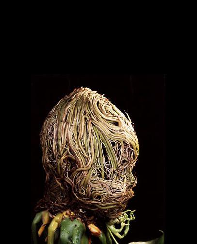 sculture radici Francis Baker