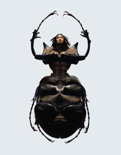laurent seroussi insect