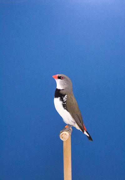 An Incomplete Dictionary Of Show Birds Luke Stephenson